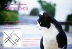 CAT'S EYES DM.jpg